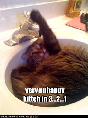 very unhappy kitteh in 3...2...1