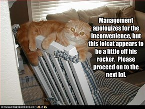 Management apologizes for the inconvenience, but this lolcat appears to be a little off his rocker.  Please proceed on to the next lol.