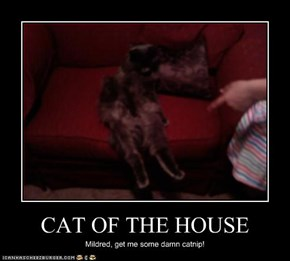 CAT OF THE HOUSE