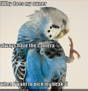 [Why does my owner  always have the camera when I want to pick my beak?]