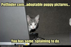 but kitteh, it's where they found *you*
