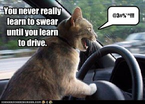 You never really learn to swear until you learn  to drive.