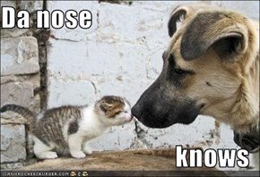 Da nose  knows
