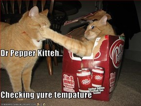 Dr Pepper Kitteh.. Checking yure tempature