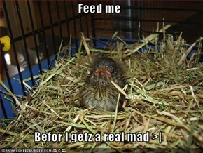 Feed me  Befor I getz a real mad >|