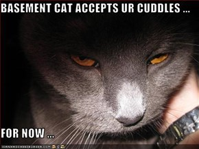 BASEMENT CAT ACCEPTS UR CUDDLES ...  FOR NOW ...