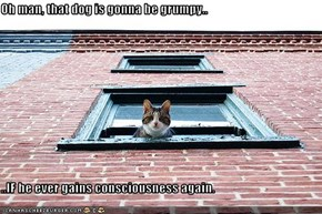 Oh man, that dog is gonna be grumpy..   ..IF he ever gains consciousness again.