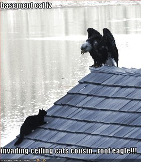 basement cat iz   invading ceiling cats cousin...roof eagle!!!