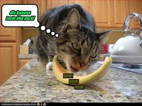 dis banana taste like yuck!