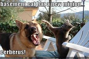 basement cat haz a new minion...  cerberus!