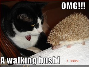 OMG!!!  A walking bush!