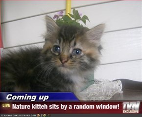 Coming up - Nature kitteh sits by a random window!