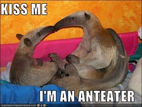 KISS ME  I'M AN ANTEATER