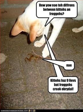 Dew yew noe teh diffrens between kittehs an froggehs?