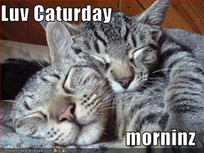 Luv Caturday  morninz