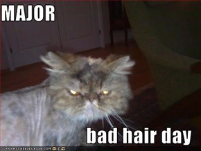 MAJOR  bad hair day