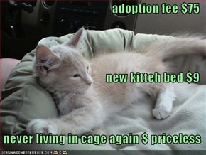 adoption fee $75 new kitteh bed $9    never living in cage again $ priceless