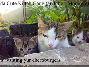 da Cute Kitteh Gang (and their Mommie)  is wanting yur cheezburgers