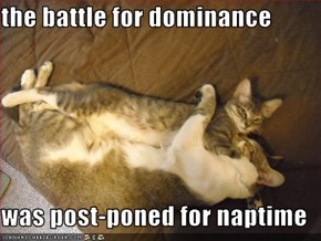 the battle for dominance  was post-poned for naptime