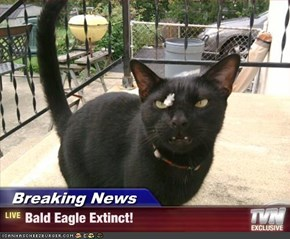 Breaking News - Bald Eagle Extinct!