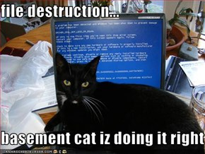 file destruction...  basement cat iz doing it right