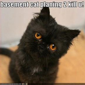 basement cat planing 2 kill u!