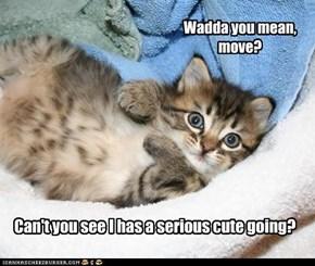 Wadda you mean, move?