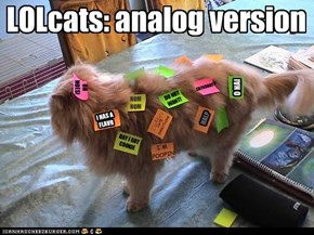 LOLcats: analog version
