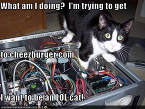 What am I doing?  I'm trying to get to cheezburger.com I want to be an LOL cat!