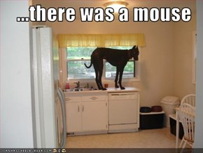 ...there was a mouse