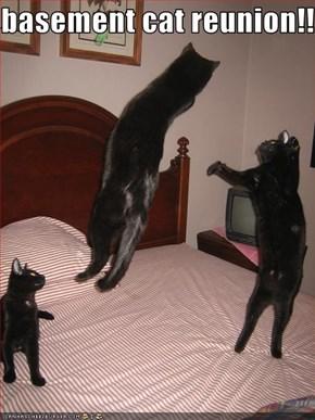 basement cat reunion!!