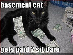 basement cat   gets paid 2 sit dare