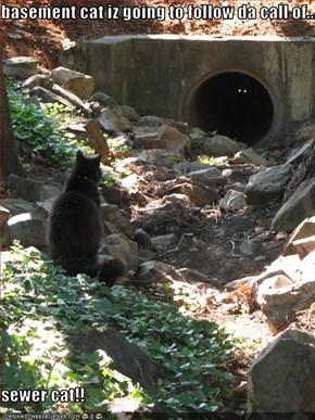 basement cat iz going to follow da call of...  sewer cat!!