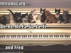Introducing..... Do, Re, Mi, Fa, So, La, Ti.... .....and Fred.