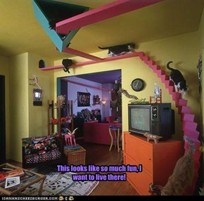 This looks like so much fun, I want to live there!