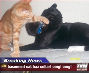 Breaking News - basement cat haz collar! omg! omg!