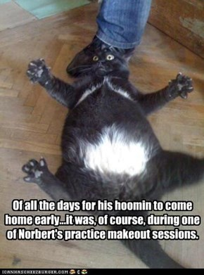 Of all the days for his hoomin to come home early...it was, of course, during one of Norbert's practice makeout sessions.
