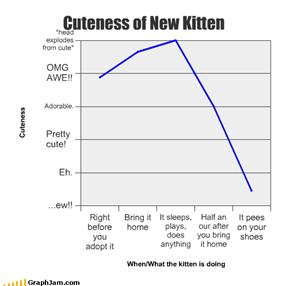Cuteness of New Kitten
