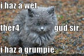 i haz a wet ther4                     gud sir i haz a grumpie