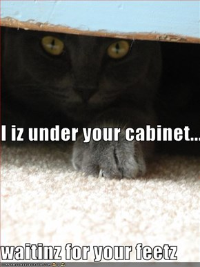 I iz under your cabinet.... waitinz for your feetz