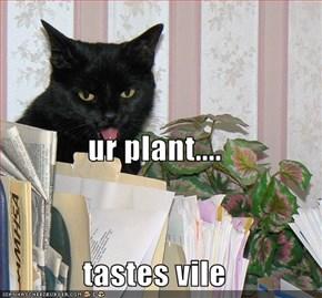 ur plant.... tastes vile