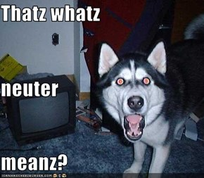 Thatz whatz neuter  meanz?