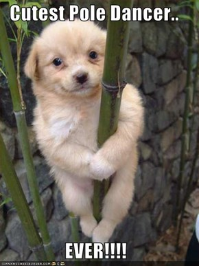 Cutest Pole Dancer..  EVER!!!!