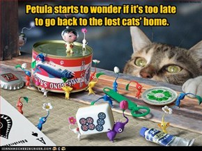Petula starts to wonder if it's too late  to go back to the lost cats' home.