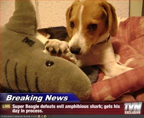 Breaking News - Super Beagle defeats evil amphibious shark; gets his day in process.