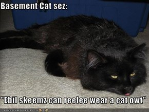 "Basement Cat sez:  ""Ebil skeemz can reelee wear a cat owt"""