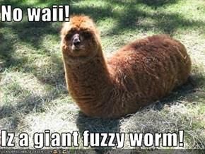No waii!  Iz a giant fuzzy worm!