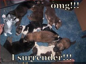 omg!!!       I surrender!!!