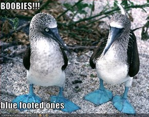 BOOBIES!!!  blue footed ones