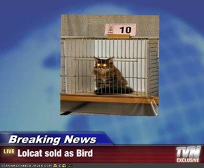 Breaking News - Lolcat sold as Bird